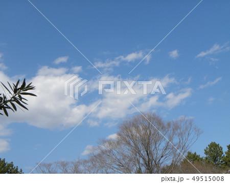 春の青い空と白い雲 49515008