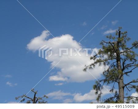 春の青い空と白い雲 49515009