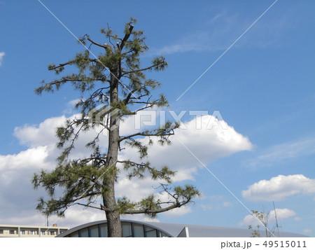 春の青い空と白い雲 49515011