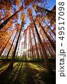 メタセコイアの森 49517098