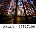 メタセコイアの森 49517100