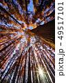 メタセコイアの森 49517101
