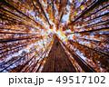 メタセコイアの森 49517102