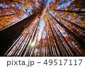 メタセコイアの森 49517117