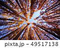 メタセコイアの森 49517138