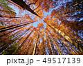 メタセコイアの森 49517139