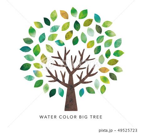 水彩の大木 49525723