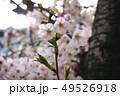 花 植物 葉の写真 49526918