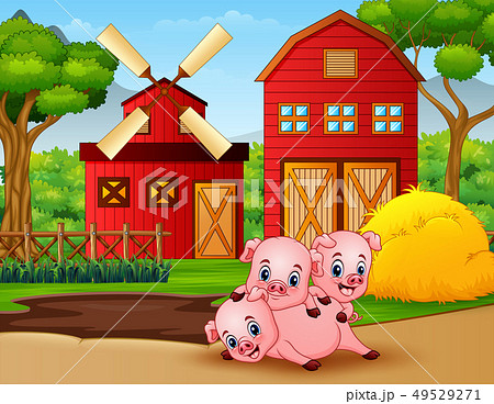 Three little pigs are playing at the farm 49529271