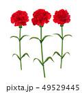 カーネーション 母の日 赤のイラスト 49529445