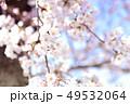桜 花 春の写真 49532064