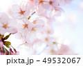 ソメイヨシノ 49532067