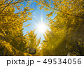 銀杏 紅葉 黄葉の写真 49534056