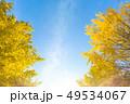 銀杏 紅葉 黄葉の写真 49534067