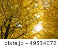 銀杏 紅葉 黄葉の写真 49534072