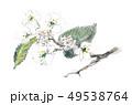 ウツギ 49538764