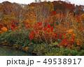 10月 地獄沼-紅葉の八甲田山- 49538917