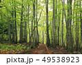 岳岱(だけたい)自然観察教育林のブナ林-世界遺産の白神山地-  49538923