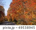 10月 紅葉の八幡平アスピーテライン 49538945
