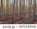 10月 安比高原の紅葉のブナ二次林 49538948