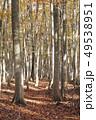 10月 安比高原の紅葉のブナ二次林 49538951