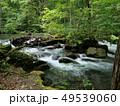 川 奥入瀬渓流 河川の写真 49539060