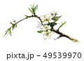 モミジイチゴの花 49539970