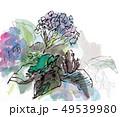 紫陽花と蛙 49539980