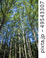 木立 木 林の写真 49543307