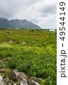 Lofoten islands landscape, Norway. 49544149