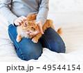 Cute ginger cat lies on woman's hands. Fluffy pet 49544154