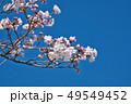桜 春 花の写真 49549452