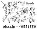 モクレン 木蓮 辛夷のイラスト 49551559