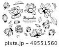 モクレン 木蓮 辛夷のイラスト 49551560