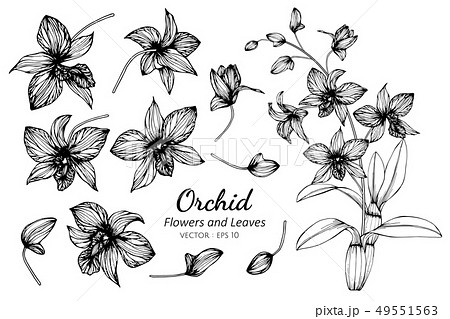 set of orchid flower and leaves drawing 49551563
