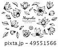 モクレン 木蓮 辛夷のイラスト 49551566