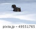 雪とリス 49551765