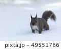 雪とリス 49551766