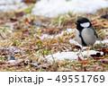 残雪とシジュウカラ 49551769