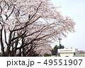 桜の栃木県総合運動公園 49551907