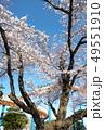 桜の栃木県総合運動公園 49551910