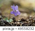 タチツボスミレ スミレ 花の写真 49558232