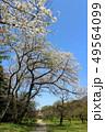 小石川植物園の桜と東京大学総合研究博物館、小石川分館(4月)東京都文京区 49564099
