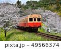 千葉県、小湊鉄道と桜 49566374