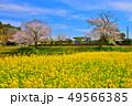 千葉県、春の小湊鉄道飯給駅と桜 49566385