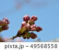 桜の蕾 49568558