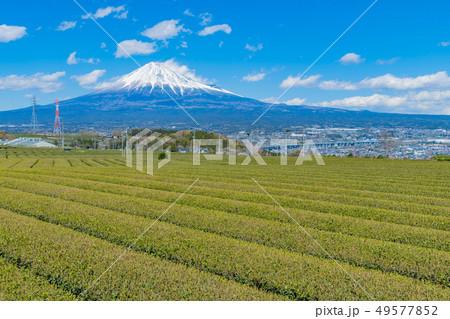 静岡県富士市の茶畑 岩本山 49577852