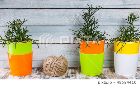 Banner. House plants in colorful pots 49584410