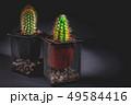 鉢 さぼてん サボテンの写真 49584416