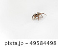 Insect Jumping Spider 49584498